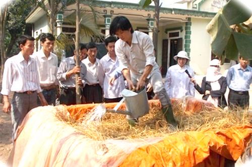 Cách chế biến rơm làm thức ăn cho trâu bò