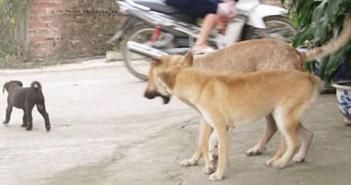 Chó thả rông