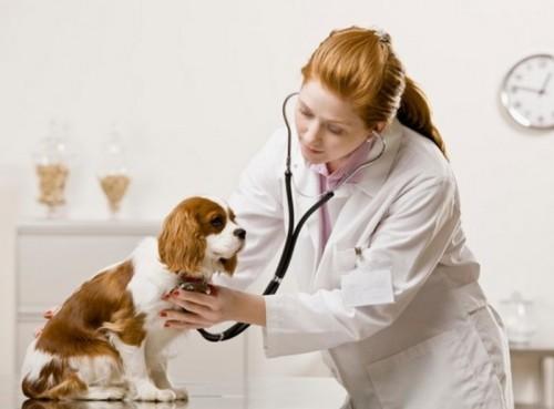 Học ngành thú y không lo thất nghiệp