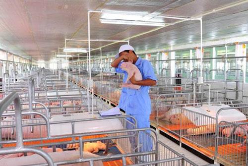 Ngành công nghệ thực phẩm, kỹ sư chăn nuôi