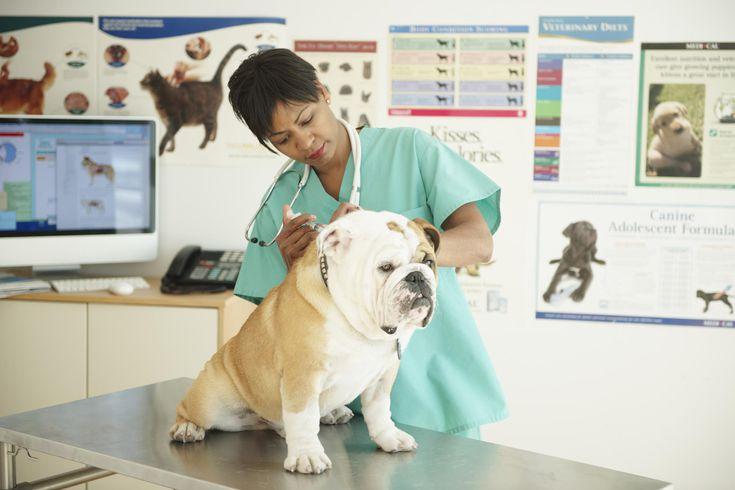Điều kiện đăng ký liên thông đại học thú y