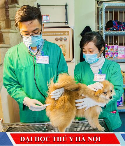 Tuyển sinh đại học thú y